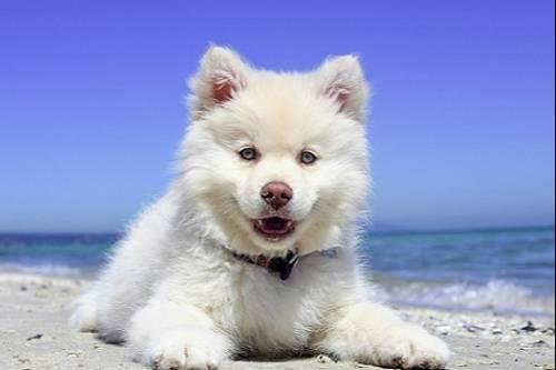 Horoskop För Hundar Gratis Hundhoroskop
